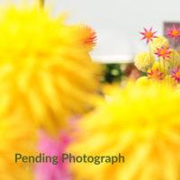 Photograph Pending